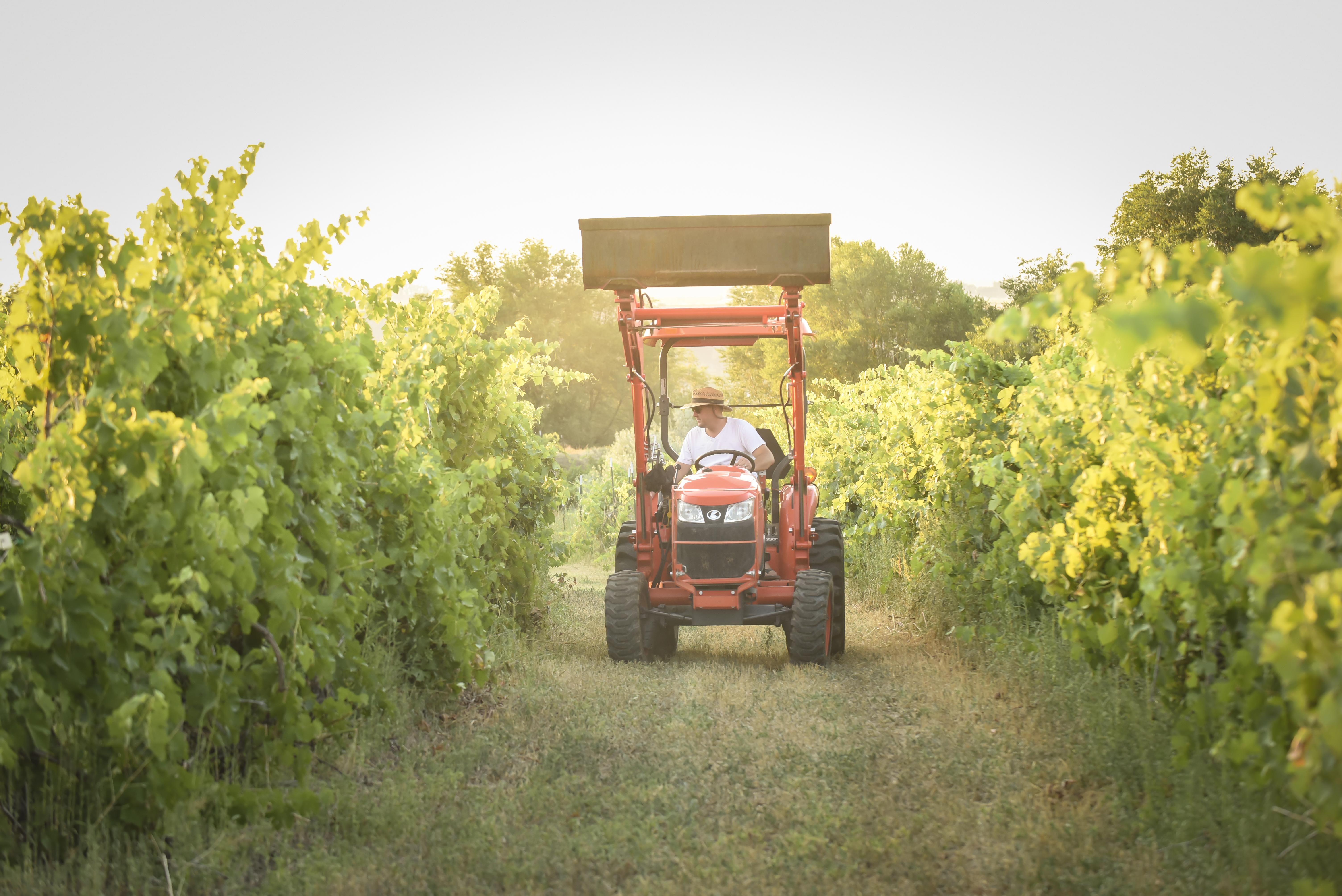 holesinsky-winery-vineyard-tractor-in-vines